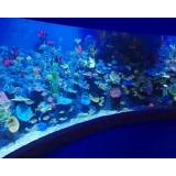 亚克力水族鱼缸的日常清洁和保养不可忽视