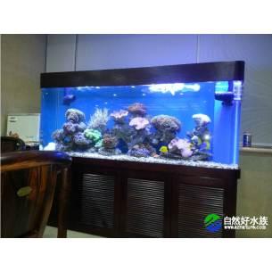 山东海水生态鱼缸(实拍)