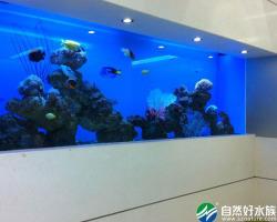 专业海水嵌入式鱼缸