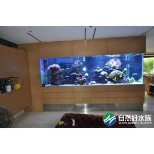 海水珊瑚生态鱼缸(实拍)