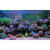 什么是海水鱼缸珊瑚造景