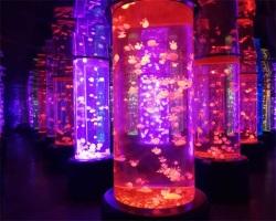 海洋馆圆柱鱼缸